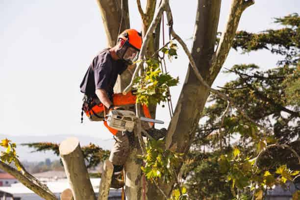 columbia sc tree cutting