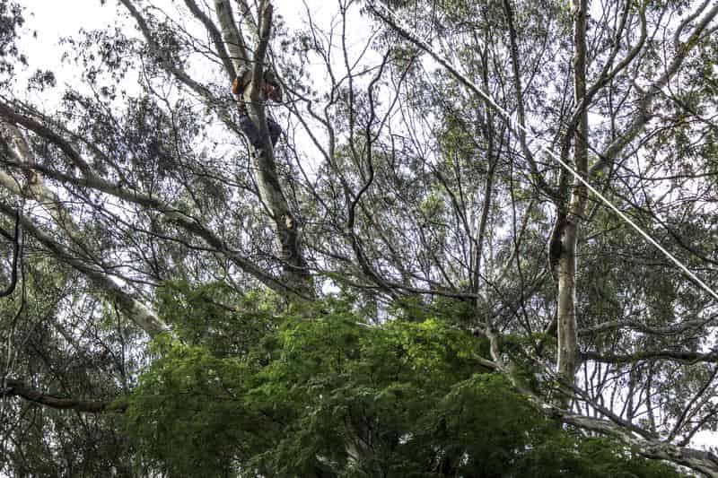 columbia south carolina emergency tree service