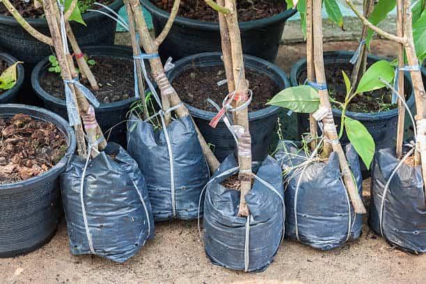 tree planting columbia sc