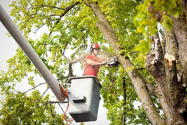 tree removal columbia sc