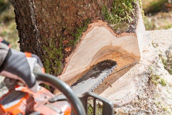tree removal columbia sc