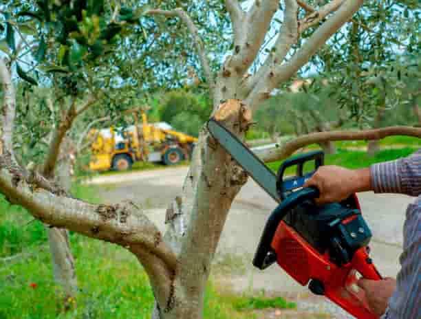 tree cutting in columbia sc