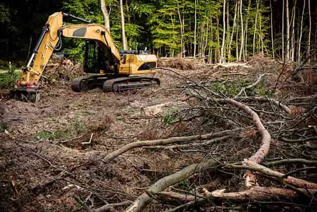 land clearing columbia sc
