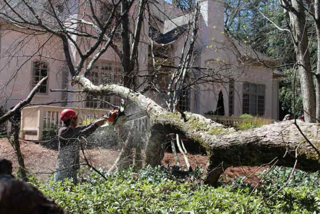 storm damage cleanup in Columbia SC