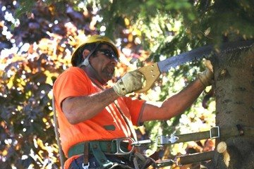 tree pruning columbia sc