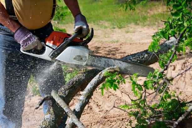 fallen tree removal columbia sc