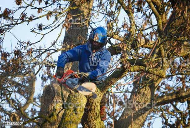 man in tree cutting limbs in columbia sc
