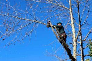 tree trimming columbia south carolina