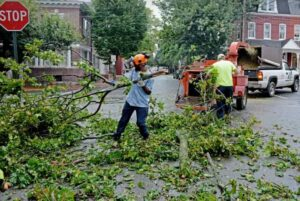 emergency tree service in columbia sc