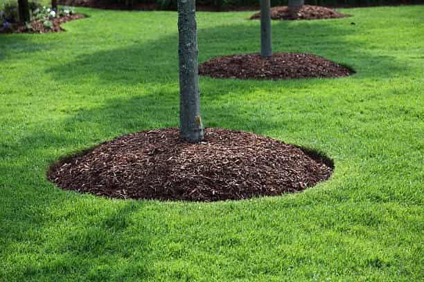 landscaping columbia sc