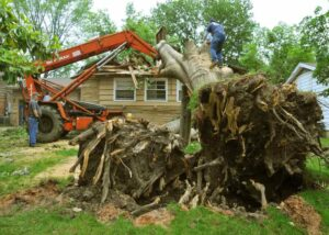 commercial tree removal columbia