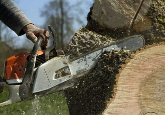 cutting and removing a tree from columbia sc