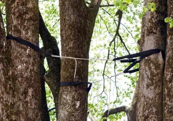 tree cabling columbia sc