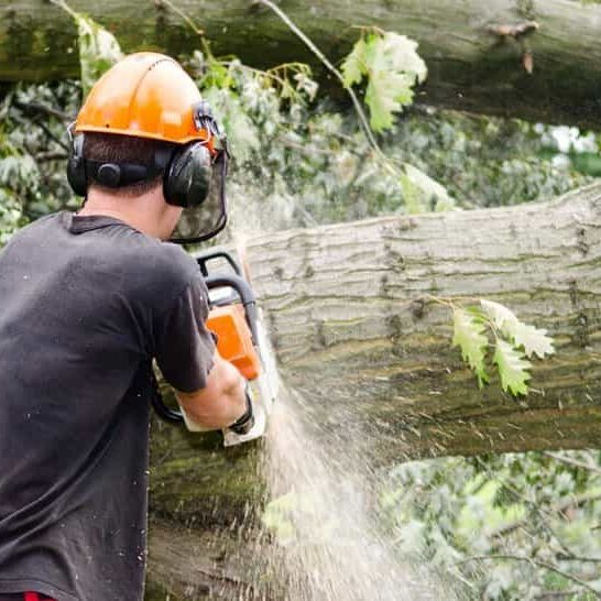 residential tree removal columbia sc